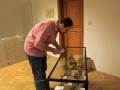 Marián Golej pri inštalácii exponátov fosílií z vrchu Butkov, ktoré do geologickej expozície daroval Dubnickému múzeu Geologický ústav Slovenskej akadémie vied