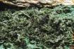 Tabula_11 Drúza kryštálov olivenitu a euchroitu, Ľubietová-Svätodušná