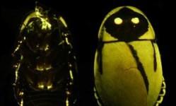 Dva nezávislé výskumy švábov Petra Vršanského v svetových médiách